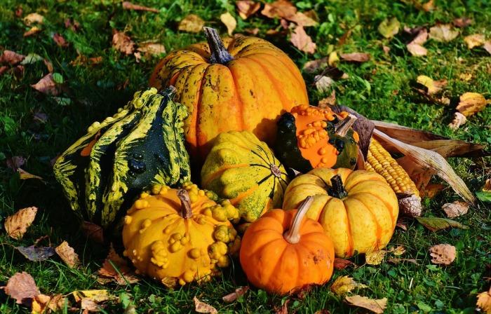 pumpkins-1712841_960_720